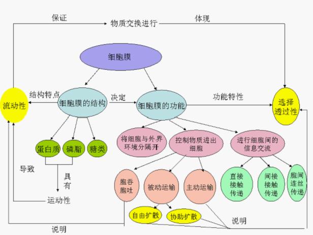 细胞膜结构和功能的概念图