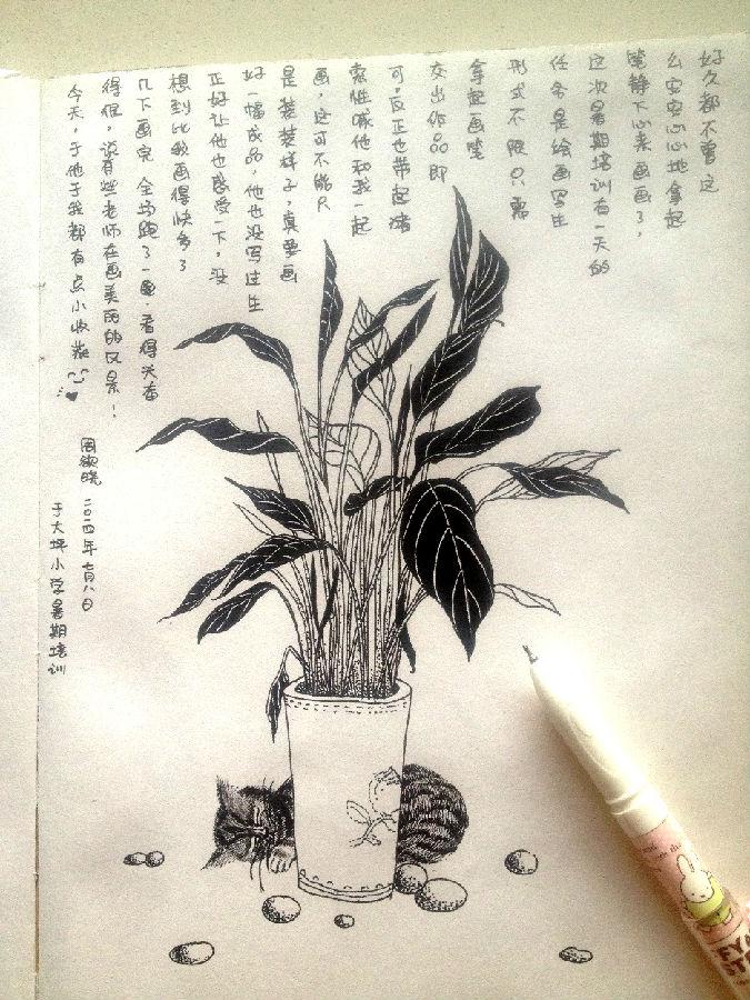 线描写生植物